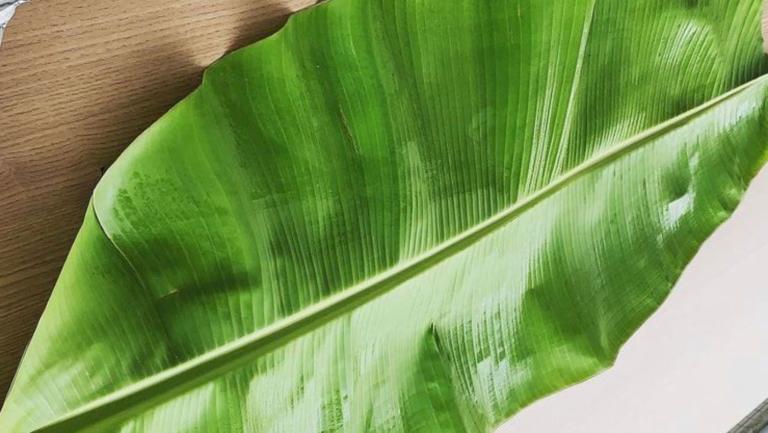 Folha de bananeira: Um modo afrodiaspórico de servir alimentos